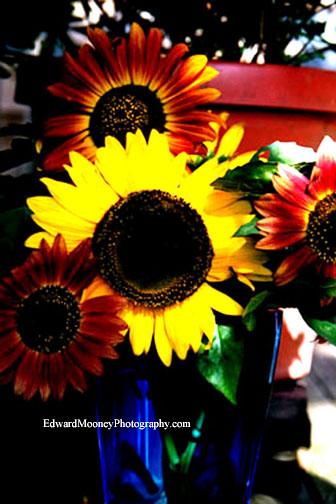 Sunflowers In Cobalt Blue Vase Photos Of Sunflowers Are So